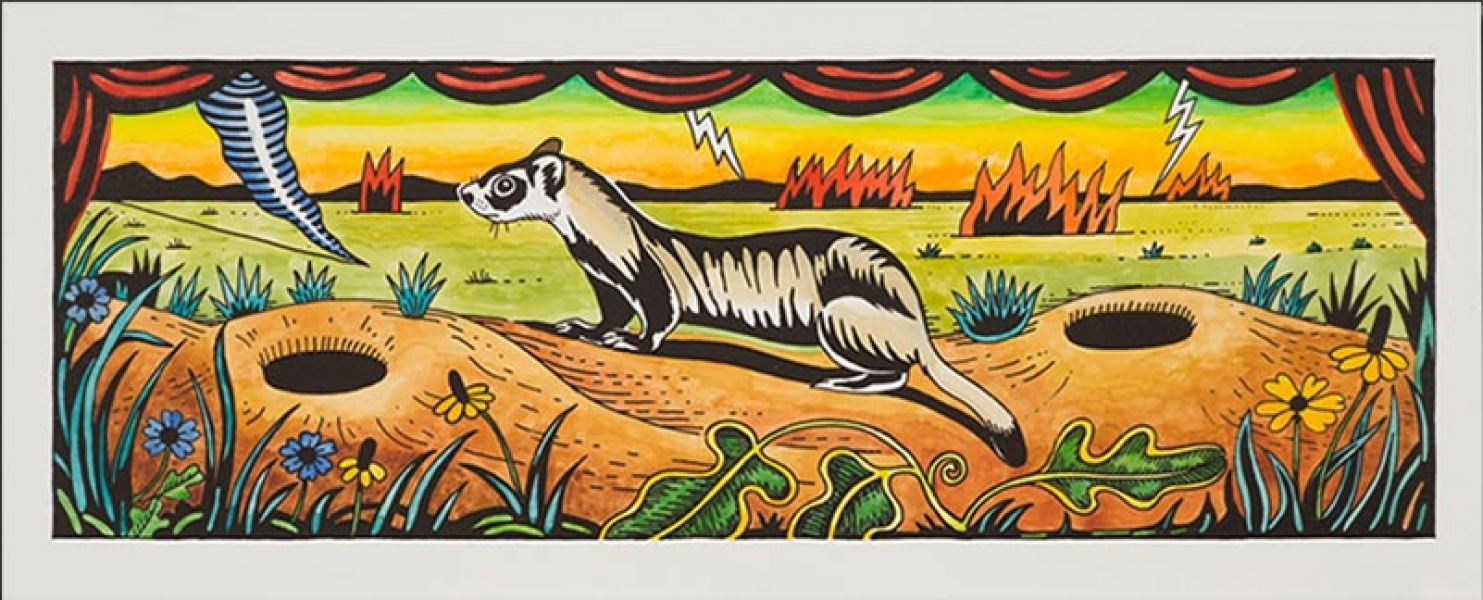 "<h5>Black-footed Ferret</h5><p>Watercolor on black and white lithograph  <br/> 8.5 x 24 ""</p>"