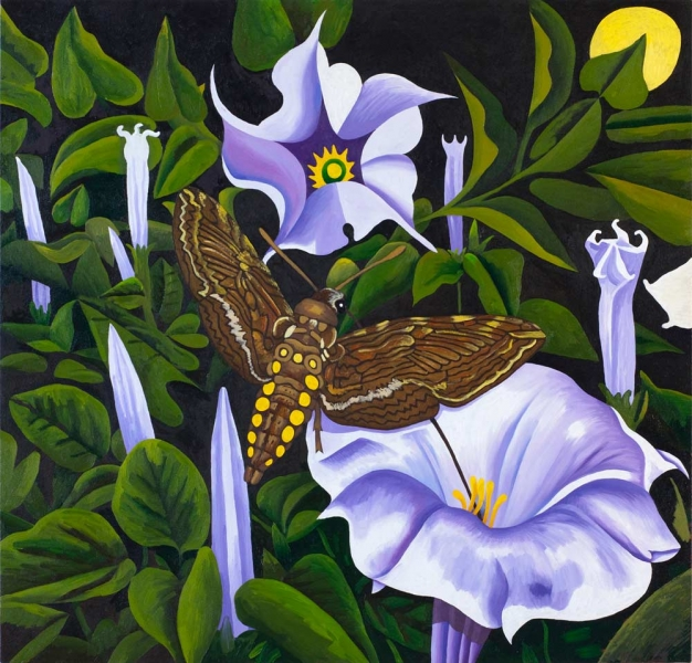 "<h5>Sphinx Moth and Moonflowers</h5><p>48 x 50 ""Oil on canvas</p>"