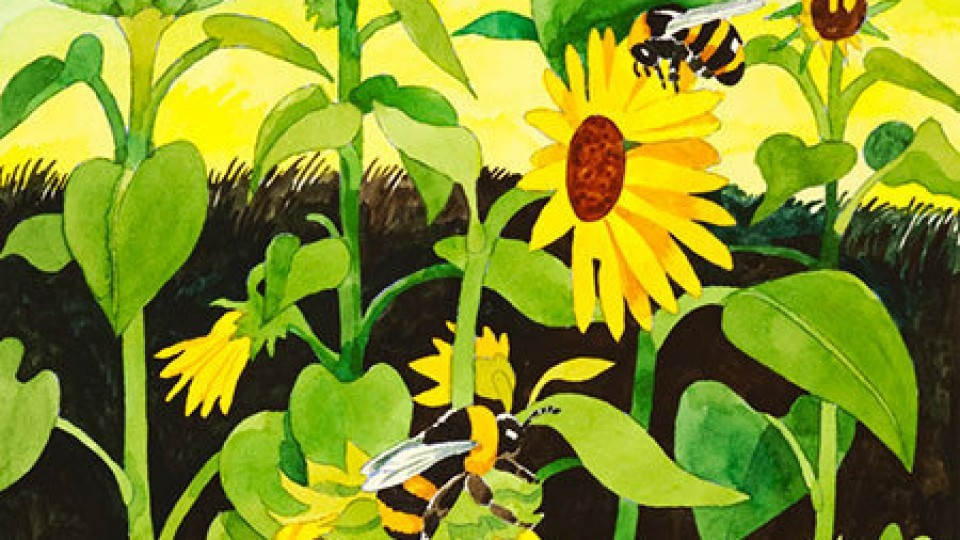 SUNFLOWERS-WITH-BUMBLE-BEES-9×9-450