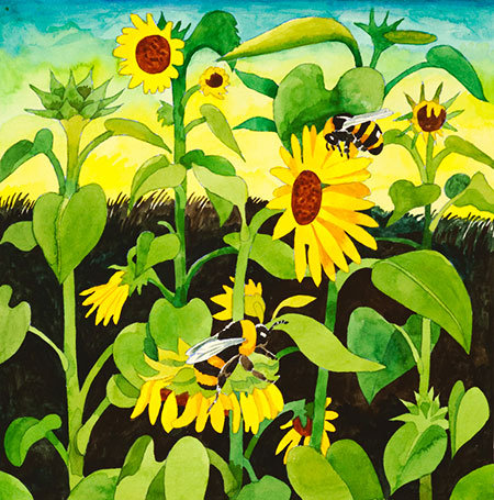 Sunflowers with Bumble Bees (9 x 9) is one of the watercolors on display at the Lady Bird Johnson Wildflower Center.